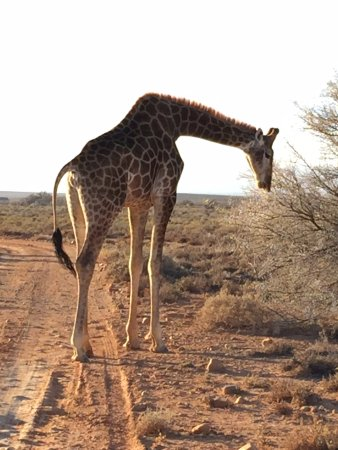 Inverdoorn Game Reserve: just one of the many animals you'll see