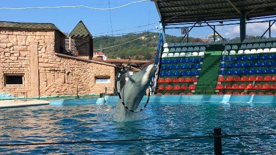 Отзывы о Дельфинарий в парке Ривьера Россия Сочи Отзовик