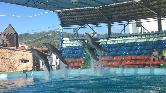 Дельфинарий в Сочи Адлер Cочи Парк официальный сайт