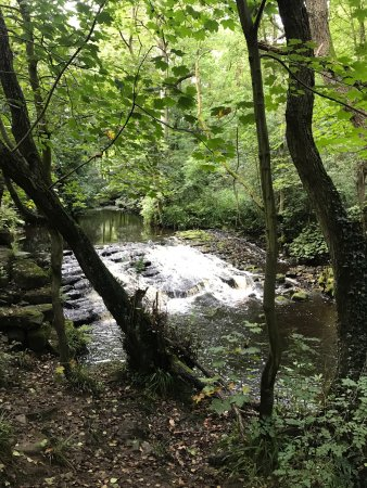 Rivelin Valley Nature Trail: photo0.jpg