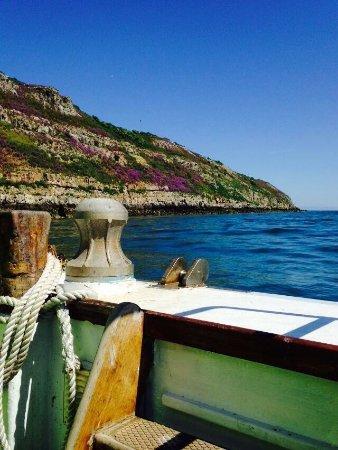 Starida Puffin Island Cruises & Sea Fishing Trips: photo3.jpg