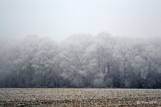 Maulevrier-Sainte-Gertrude, Frankrike: givre sur la forêt