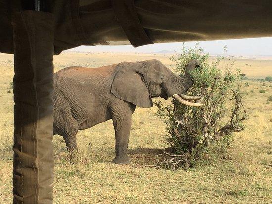 Enkewa Camp: Safari drive