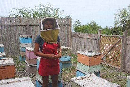 Big Island Bees: Beekeeper