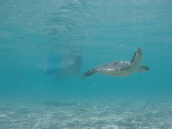 Hauula, Χαβάη: Snorkeling with sea turtles