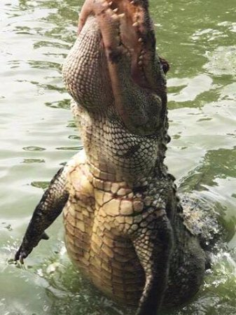 Kliebert's Turtle & Alligator Farm: Large alligators