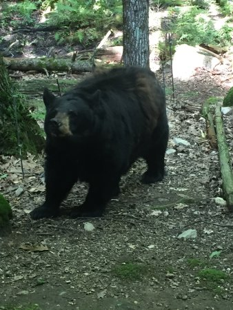 Holderness, NH: Squam Lakes Natural Science Center