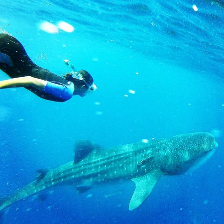 On Isla Mujeres Water Tours: Don't forget your GoPro!