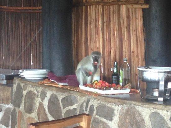 Umkumbe Safari Lodge: photo8.jpg