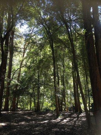 Hornsby, Australia: 森林の様子