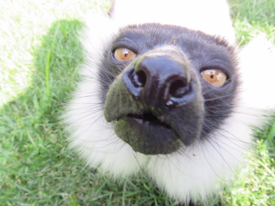 Attleboro, MA: Up close to the Lemur