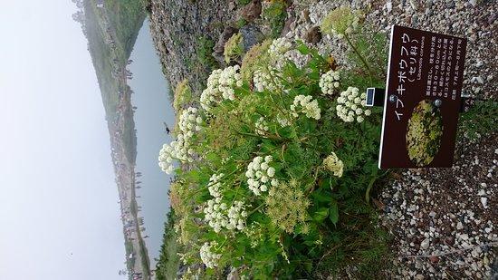 Happo Pond: 夏・曇り・八方池