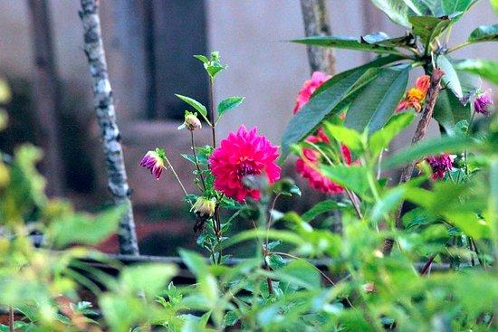 AjjanaMane Homestay: Garden area
