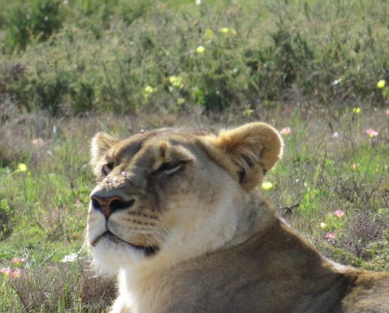 Garden Route Game Lodge: A resident......