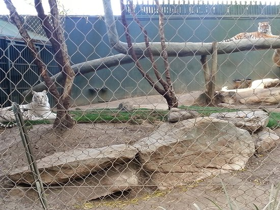 Siegfried Roy 39 S Secret Garden And Dolphin Habitat Las