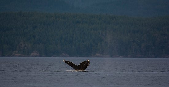 Quadra Island, Canada: And Humpbacks