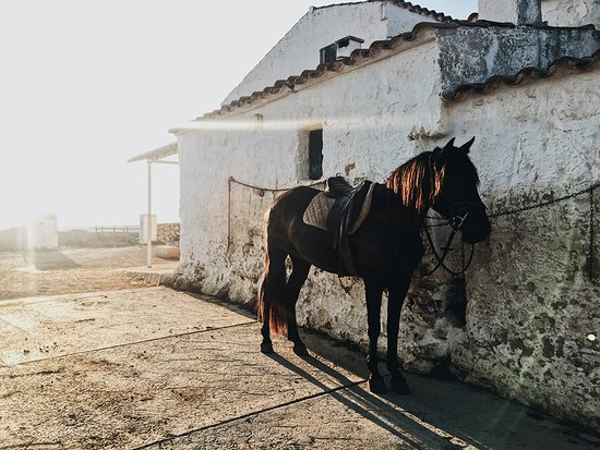 Cavalls Son Angel : Pferd am Stall