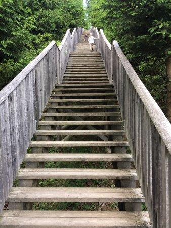 Styria, Østrig: ersten Treppen zum Wald