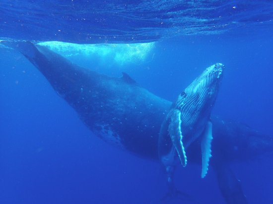 Dolphin Pacific Diving and Whale Watching: photo0.jpg