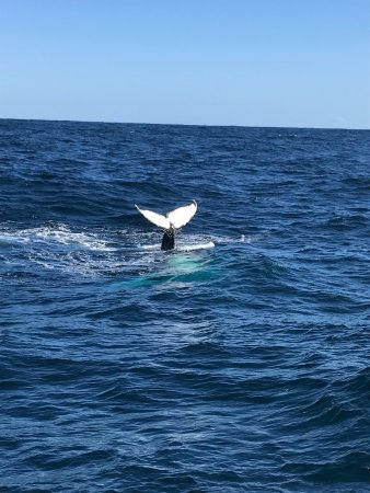 Whale Watching Tours Sydney Reviews