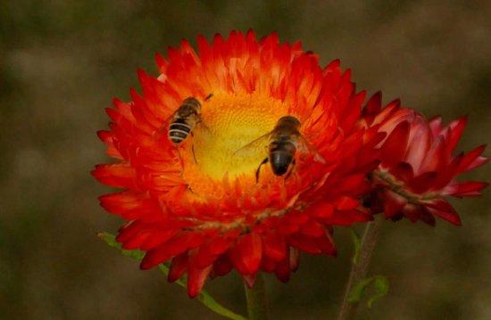 St Austell, UK: The Flower Garden