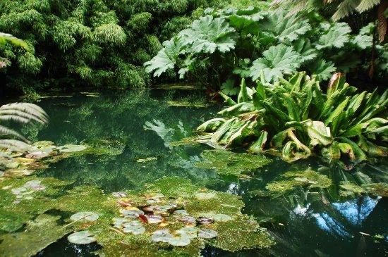 St Austell, UK: Jungle pool