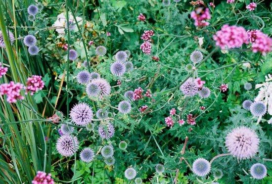 St Austell, UK: Sundial garden (Kodak Ektar film)