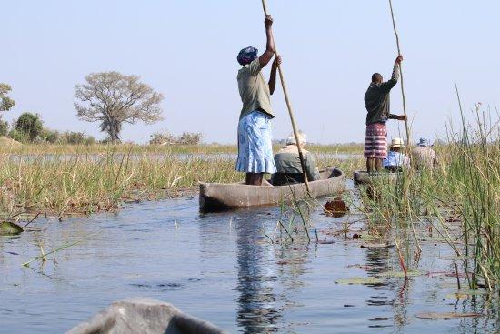 Maun, Botswana : Mokoros on a safari
