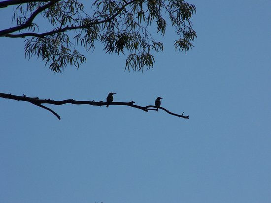 Bonnievale, Sudafrica: Giant Kingfisher