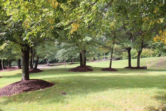 Wyndham Hamilton Park Hotel and Conference Center: Parco vicino al parcheggio auto