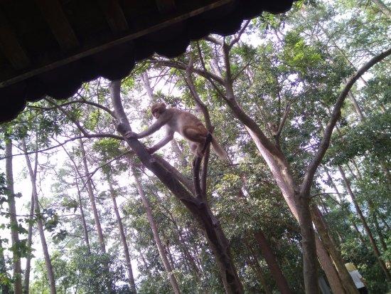 Chun'an County, Kina: Monkey Island