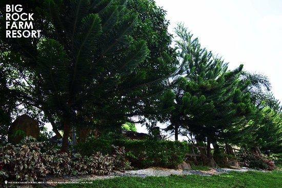 San Rafael, Philippines: Trees around the resort.