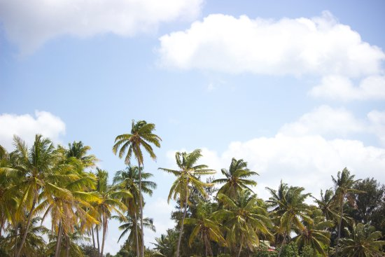 New Teddy's Place: Palm Trees on Paje Beach
