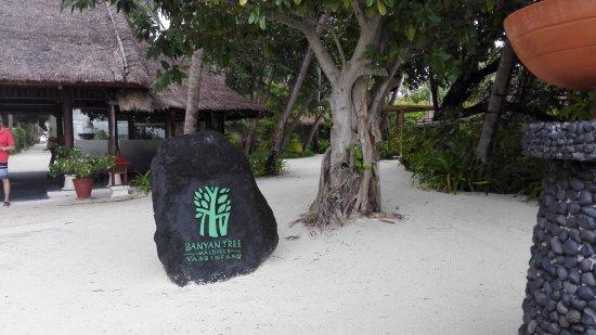بانيان تري جزر المالديف: IMG_20170907_072856_large.jpg