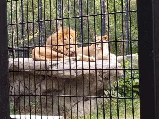 Blank Park Zoo: awesome majestic couple
