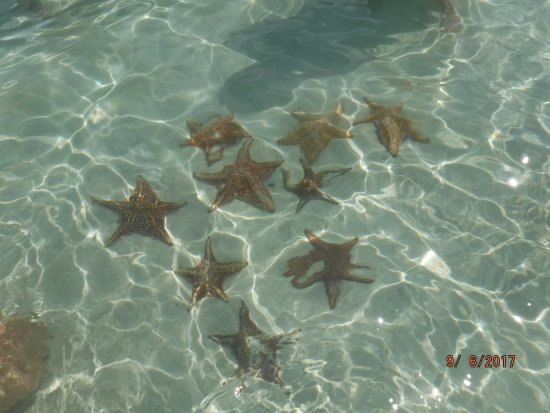 Acquarius Sea Tours : Starfish Island in Cayman