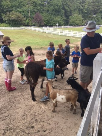 Chapel Hill, Carolina del Nord: KIds and Kids (Including Fainting Goats)