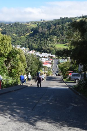 Baldwin Street Dunedin New Zealand What You Need To Know With Photos Tripadvisor