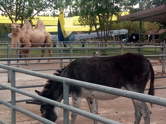 Cassano Magnago, Italy: Animali del parco