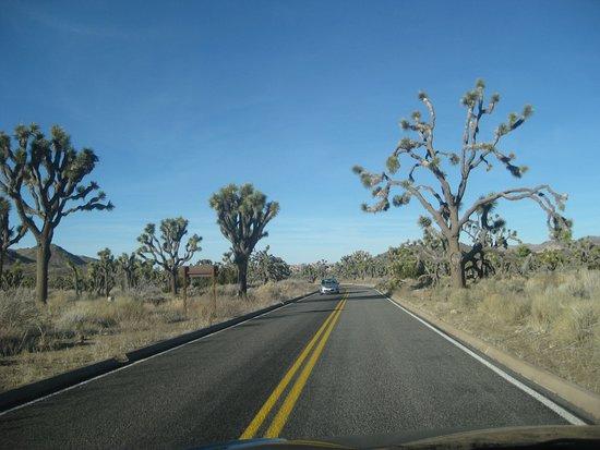 Twentynine Palms, كاليفورنيا: The drive in the park
