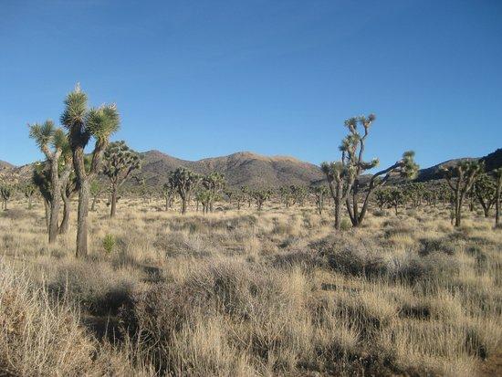 Twentynine Palms, كاليفورنيا: Beautiful!
