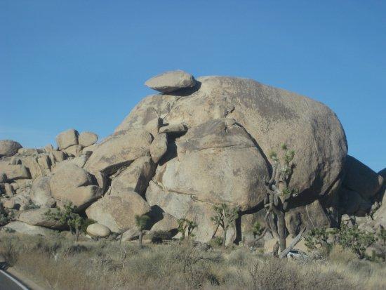 Twentynine Palms, كاليفورنيا: Trees, rocks and boulders!