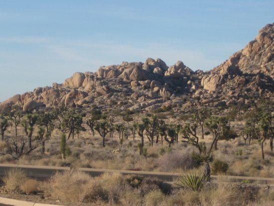 Twentynine Palms, كاليفورنيا: The garden of the trees with the rockies wall in background