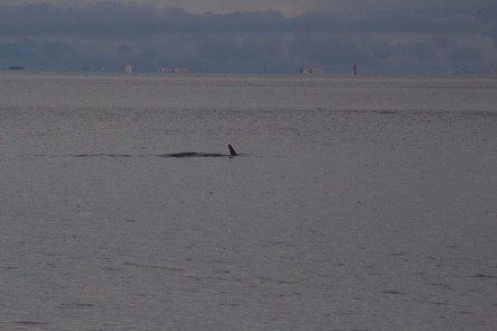 Palmetto, Φλόριντα: Der erwähnte Delfin