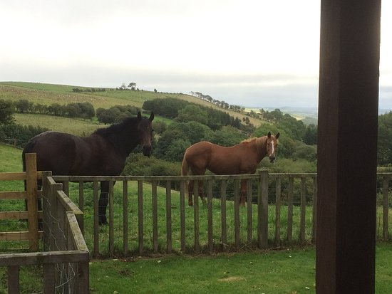 Bleddfa, UK: View from the sitting room (our own horses)