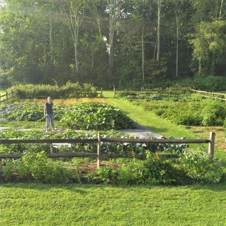 The Marble West Inn: Our Organic Herb, Vegetable & Fruit Garden - The Marble West Inn, Dorset, Vermont