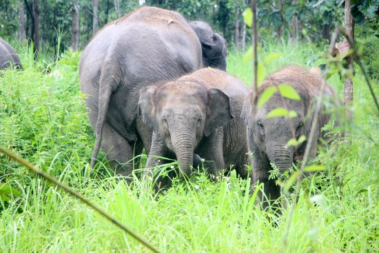 Mae Rim, Thailand: where elephants are loved and respected.