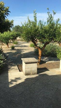 Masseria Limbitello: photo0.jpg