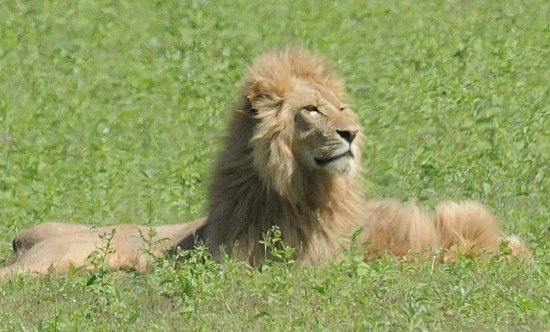 East Africa Adventure Tours and Safaris - Day Tours : His Majesty