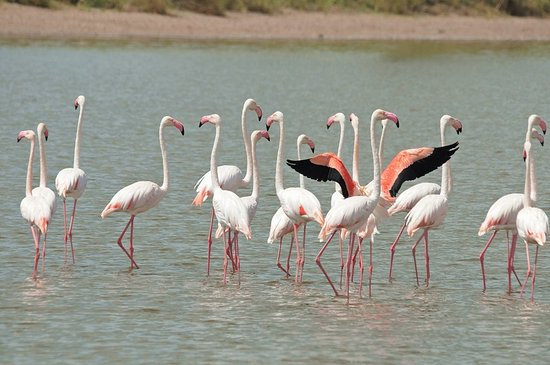 East Africa Adventure Tours and Safaris - Day Tours : Only seen a few flamingos due to drought